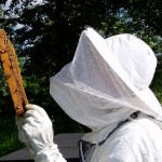 Urban Beekeeping for the Beginner