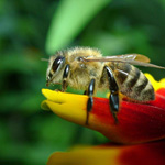 Limiting Use Of Pesticides And Insecticides for The Sake Of Your Bees!