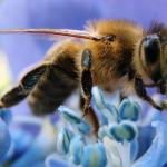 Planning A Bee Garden